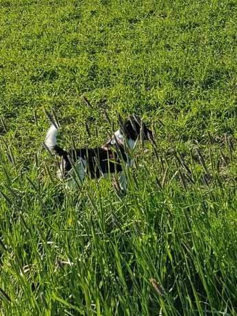 Wo ist der Hund???